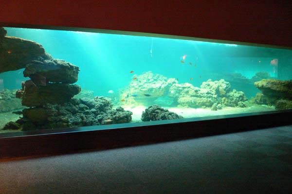 Baie d'aquarium en plexiglas
